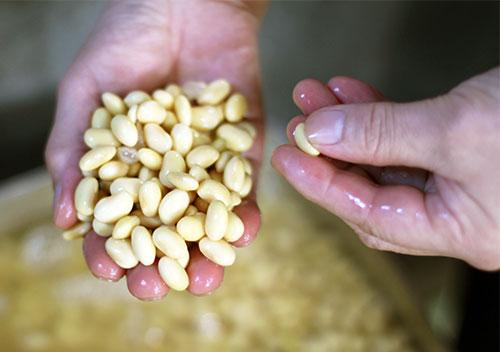 大豆の浸水具合をチェック。